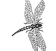 Dragon Fly B&W by Fred  Wordie