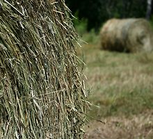 Summer Hay by Kathleen M. Daley