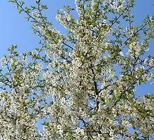 spring by mrivserg