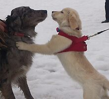 """Freeze- """"Love at first sight"""" by donnaleigh"""