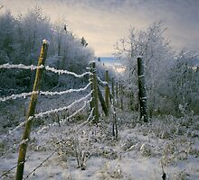Frosty Fence by Karl  Zielke