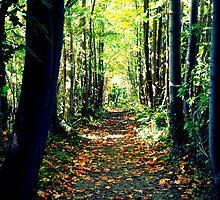 Nature Path by playfulkit
