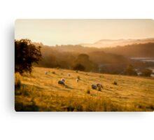 Golden Mist by Smart Imaging Canvas Print