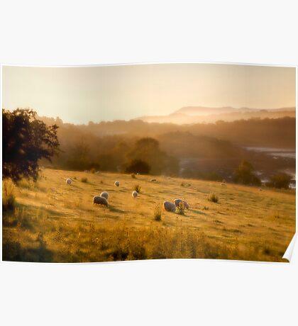 Golden Mist by Smart Imaging Poster