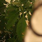 Plant Exposed by Debbi Bigsky