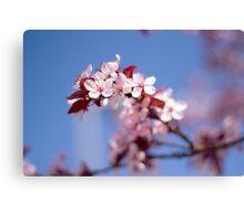 Spring's Awakening Canvas Print