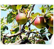 Apple Sky Poster