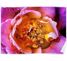 Rose Rain Reservoir Poster