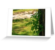 Tree Vine Greeting Card