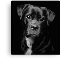 A Loveable Face by Smart Imaging Canvas Print