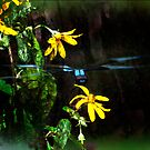 Dragonfly Blend by michaelasamples