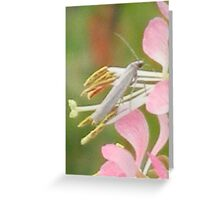 Closeup of Flower Rider Greeting Card