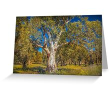 Flinders Ranges Gums Greeting Card