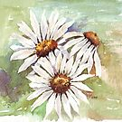 Daisies - the gardener&#x27;s friend by Maree Clarkson