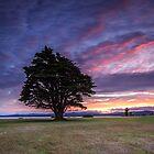 Lone Tree Sunset - version II by fotosic