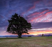 Lone Tree Sunset - version II by fotosic