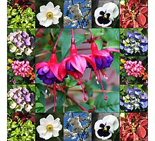 Vibrant Flowers Collage Photographic Print