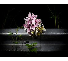 Roadside memorials #20 Photographic Print
