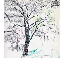 Tree in Winter pastel sketch Photographic Print