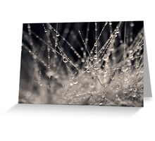 Wild Grass Abstract Greeting Card