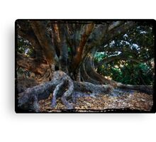Magestic Fig Canvas Print