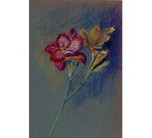 Flower-pastel sketch Photographic Print