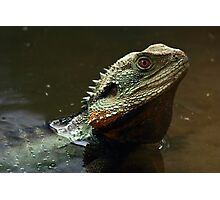 Waterdragon Swims Photographic Print