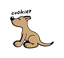 Dog wants a Cookie Photographic Print