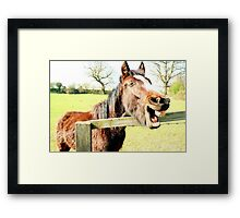 Laughing Horse Framed Print