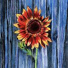 Sunflower on Blue Fence by lginn8510