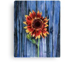 Sunflower on Blue Fence Canvas Print