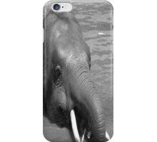 Borneo Pygmy Elephant iPhone Case/Skin