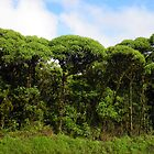 Scalesia Trees To Attention by Sauropod8