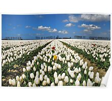 Spring.... Poster