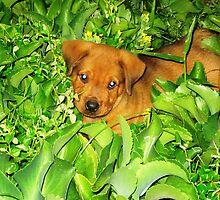 My puppy Max by trinilab