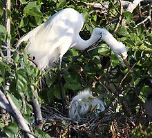 Heron and Babies by Gail Falcon