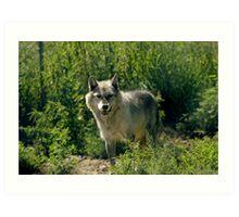 "'Timber Wolf"" Art Print"