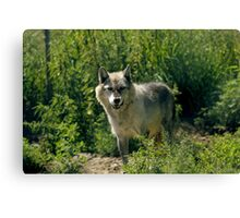 "'Timber Wolf"" Canvas Print"