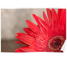 African Daisy 2 Poster