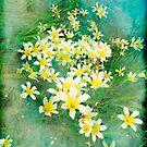 When the lilies awaken by Anne  McGinn
