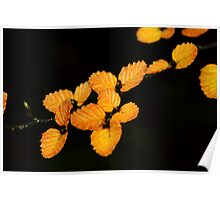 Yellow 'fagus Poster