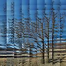 Alder by Loch Leven by cuilcreations