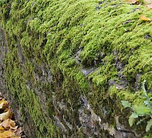 Mossy Dry Stone Wall  by Rich Fletcher