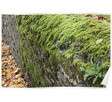 Mossy Dry Stone Wall  Poster