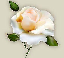 Rose  by tonitntpro