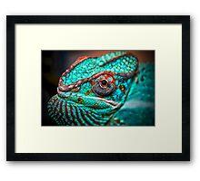 Tragan - Panther Chameleon Framed Print