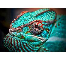 Tragan - Panther Chameleon Photographic Print