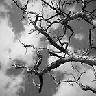 Tree | Sky by studio2eight