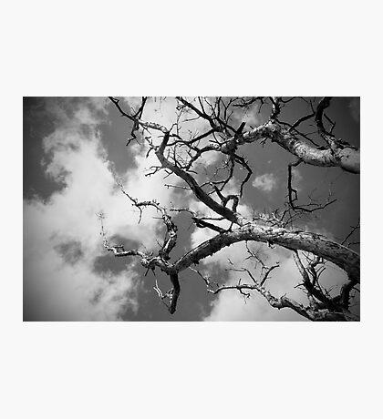 Tree | Sky Photographic Print