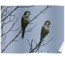 Monk Parakeets Thank Me Poster